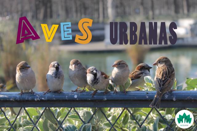 Aves urbanas portada