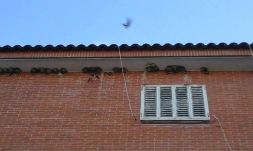 fotos nido tirados en salamanca