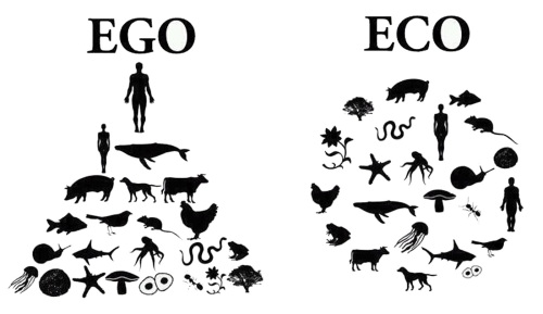 Egosistema frente a ecosistema