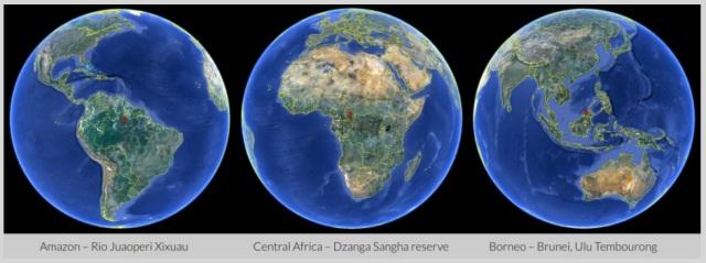 Escucha los últimos bosques tropicales del planeta