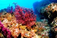 cambio climatico afecta arrecifes de coral