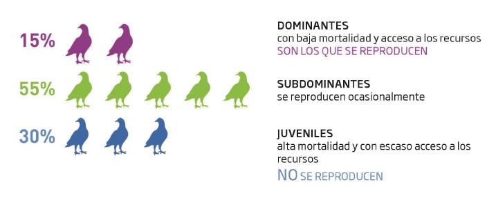 jerarquizacion-p-palomas