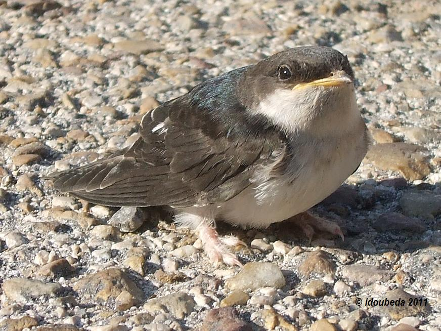 Destrucción de nidos, qué dice la ley y qué hacer si presenciamos estos actos