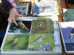 Fichas de aves urbanas