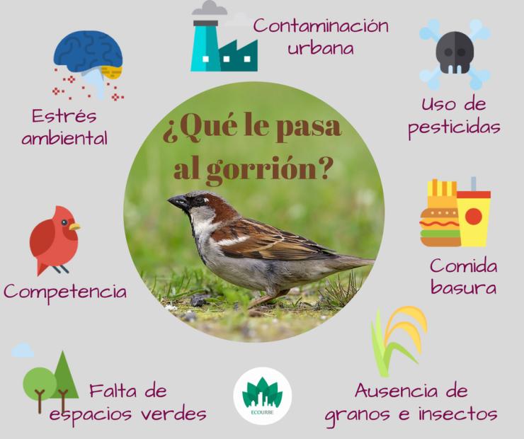Día mundial del gorrión