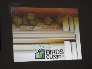 Birdsclean